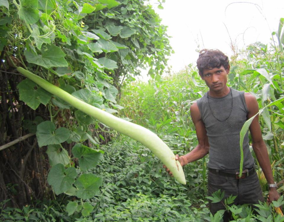 organic-farming-vaagdhara