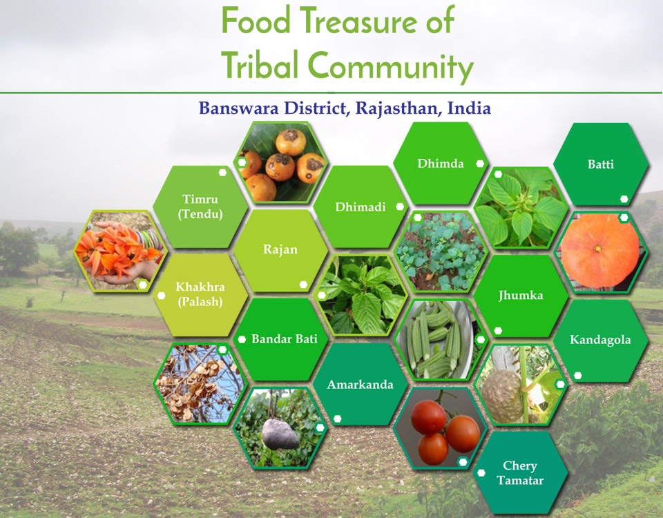Nutritive-Analysis-of-Indigenous-Traditional-Food-Items-of-Tribal-Community