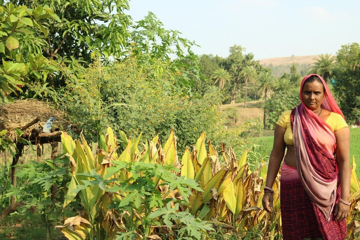 Nirmala-Mahipal-Kitchen-Garden-1